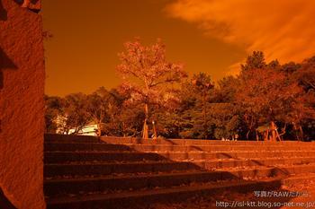 161129-03-park-orange.jpg