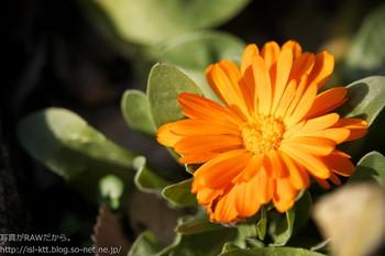 161208-02-kinsenka-closeup.jpg